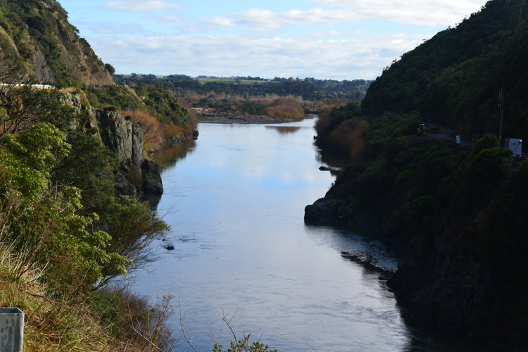 $100,000 funding boost to fight invasive weeds in Te Āpiti – Manawatū Gorge