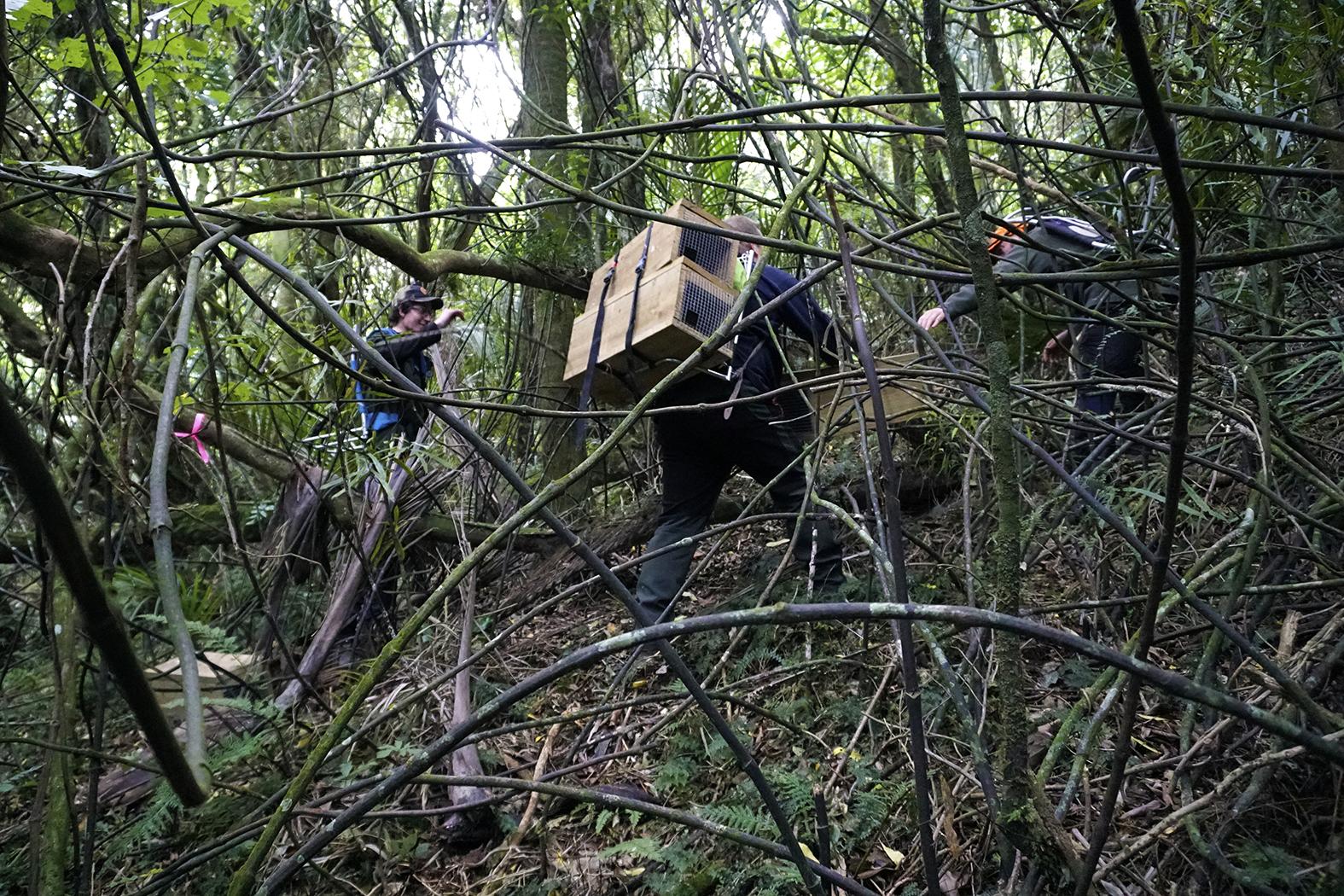 Milson Scouts' Manawatu Gorge Trap Line