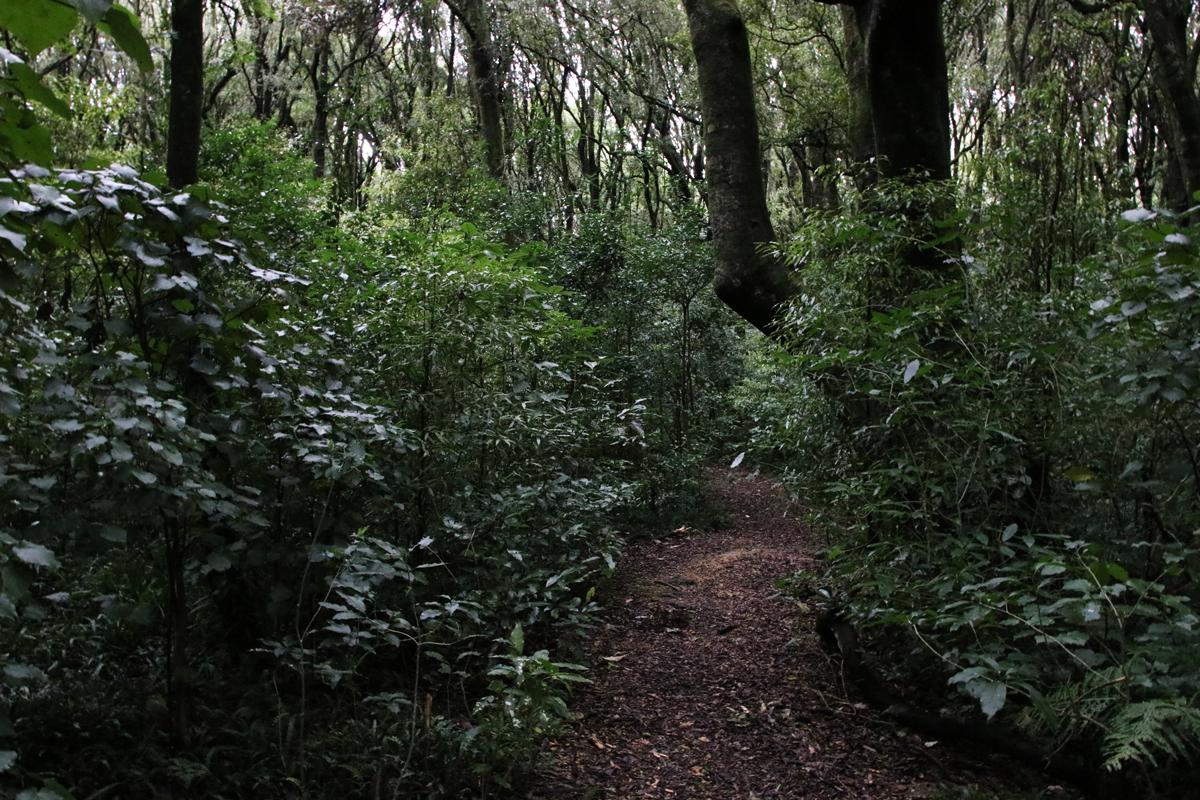 Walking track at Ballance Domain