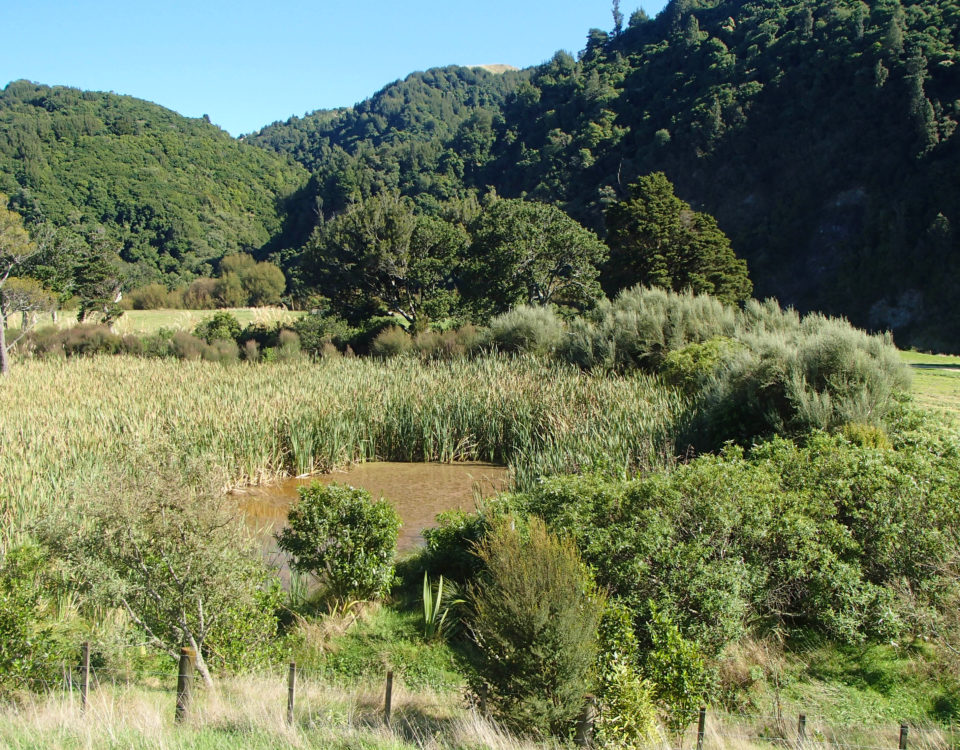 A small wetland in Ferry Reserve, Manawatu Gorge
